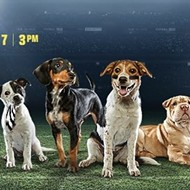 Meet the 12 Orlando puppies appearing in Puppy Bowl XII