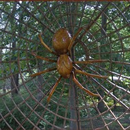Bug-A-Palooza kicks off Leu Gardens' Big Bugs exhibit on Saturday