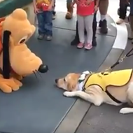 Watch this cute guide dog in training meet Pluto for the first time