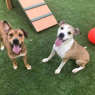 Gimme Shelter: Meet Gracy and Bear!