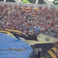 New documentary 'Blackfish' puts SeaWorld on the offense