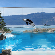 SeaWorld releases details on what the future of their remaining orcas will look like