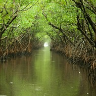 Rick Scott approves 'Legacy Florida' money for Everglades, Lake Apopka