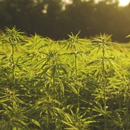 Florida lawmakers get behind hemp industry