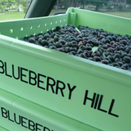 Find your thrill: 4 places to pick blueberries around Orlando