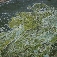 Scott declares state of emergency over algae blooms on Treasure Coast