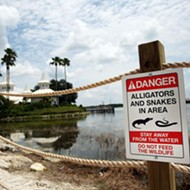 Firefighters at Walt Disney World resort warned to stop feeding alligators