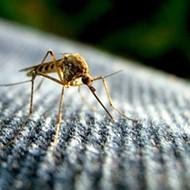 The British government issues Florida travel warning over Zika virus