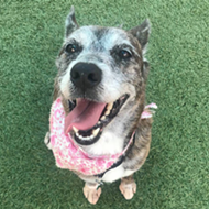 Gimme Shelter: Meet Penny!