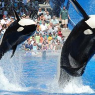 SeaWorld Orlando announces its 2017 plans tomorrow; here's what to expect