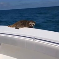The lawyer who pushed a raccoon into the ocean may be in trouble with the Florida Bar