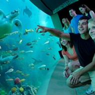 SeaWorld Orlando offers free admission to military veterans and their families