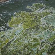 Florida's Blue Green Algae Task Force got underway this week
