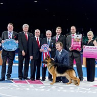 Find out who's a good dog at the AKC National Championships this weekend