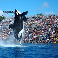 SeaWorld announces major leadership shakeup