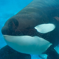 SeaWorld orca Tilikum is dead