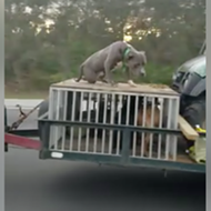 Florida 'asshole' drives down I-95 with dog chained to roof of crate