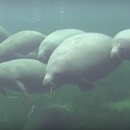 For the love of god stop killing Florida's manatees