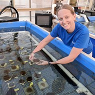 Florida Aquarium achieves major breakthrough to save Atlantic coral