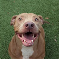 Meet Skye! She knows basic commands, loves yummy treats, and is free to adopt in Orange County