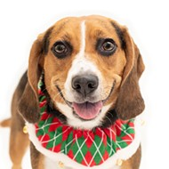 These adoptable little Santa's helpers in Orange County need homes for the holidays