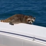 Florida lawyer who filmed himself leaving a raccoon to die 20 miles offshore told to take a workshop