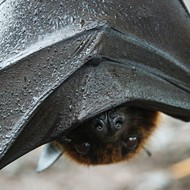 New Orange County program aims to house homeless bats