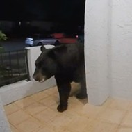 Altamonte Springs doorbell camera captures enormous black bear on front porch