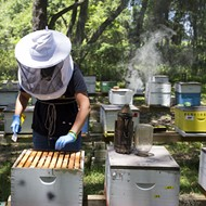 University of Florida opens online version of Master Beekeeper apprenticeship program