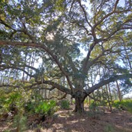 Take a look at Orange County's Split Oak Forest, before it's destroyed by a new highway