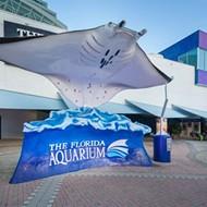 Tampa's Florida Aquarium announces multimillion dollar updates, 25th anniversary adult slumber party