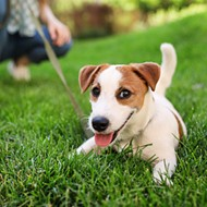 Bring your pooch to downtown Orlando's Lake Eola Park for Paws in the Park this weekend