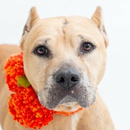 Meet Bonnie! She's a sweet 10-year-old spayed female who is free to adopt in Orange County