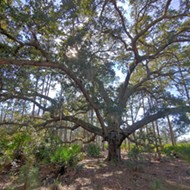 Split Oak Forest could be saved by the coronavirus pandemic