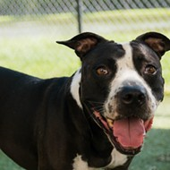 Make an appointment to meet Magic at the Orange County Animal Shelter