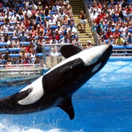 Amid pandemic, Orlando-based SeaWorld reports quarterly loss of $131 million