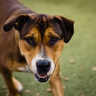 Adoptable dog Shakes is fearful of skateboards, but otherwise loves to spend time outdoors!