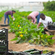 Florida and counties look to boost farmworker testing