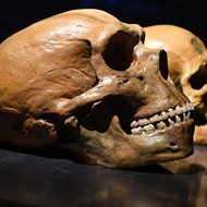 Neandertal genes may raise risk of severe COVID-19 — though they may protect against other diseases