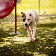 Gorgeous, timid Teagan is not thriving in the shelter environment; she's seeking an adopter ASAP