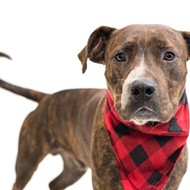 Jarvis does not get along with cats, but he loves people and he's waiting to meet you at the Orange County animal shelter