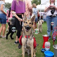 Pet Alliance of Greater Orlando brings Paws in the Park back to Lake Eola