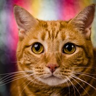 Orange you glad you can meet Orangie at the Orange County animal shelter today?