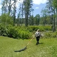 WATCH: Florida police officer wards off horny alligator with a broom
