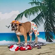 PETA to barbecue a 'dog' in downtown Orlando