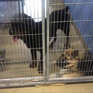 Orange County Animal Services, a kill shelter, is overflowing with dogs
