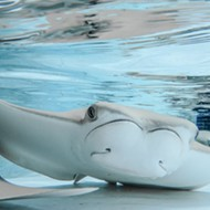 ZooTampa's Stingray Bay will not reopen after 12 stingrays died of gas bubble disease