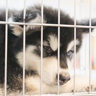 Orange County Commission votes to ban retail sale of puppies, kittens and rabbits