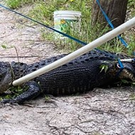 Florida man fashioned tourniquet from dog leash for cyclist bitten by alligator