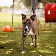 Adoptable dog Tigger is ready to bounce out of Orange County Animal Services and into your home
